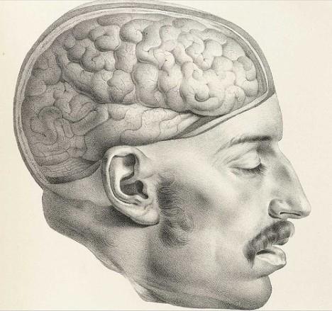 Head exposed brain illustration
