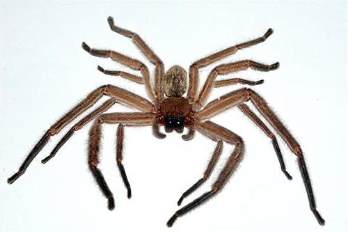Hyperreal Spider