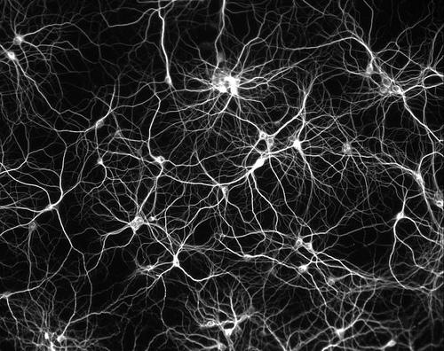 Neuron back background
