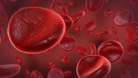 Red blood cells in vessel