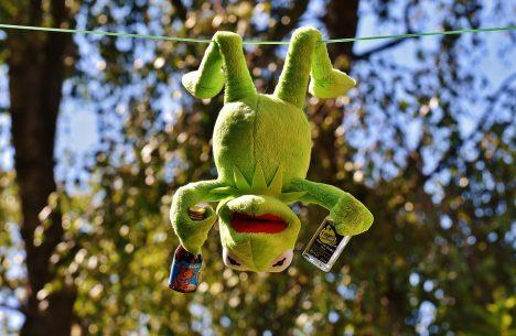 kermit-drunk-personality-type
