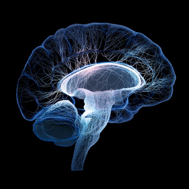 brain wiring definition basic wiring diagram u2022 rh rnetcomputer co Train Your Brain Train Your Brain